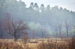 Mistv di mattina Fotografia Stock