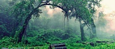 misty δάση Στοκ εικόνες με δικαίωμα ελεύθερης χρήσης