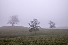 misty δάση στοκ εικόνες