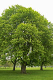 misty δέντρα πάρκων πρωινού της Α&g Στοκ εικόνα με δικαίωμα ελεύθερης χρήσης