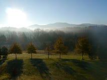 misty δέντρα Στοκ Φωτογραφίες