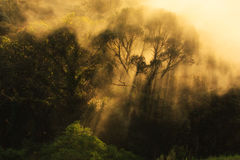 misty ανατολή πρωινού στο βουνό στη βόρεια Ταϊλάνδη Στοκ φωτογραφία με δικαίωμα ελεύθερης χρήσης