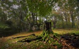 Misty δάσος Στοκ εικόνες με δικαίωμα ελεύθερης χρήσης