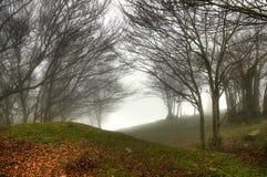 misty δέντρα Στοκ Εικόνες