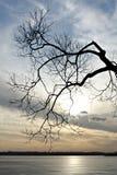 misty δέντρο λιμνών Στοκ Εικόνα