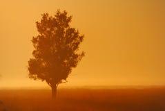 misty δέντρο Στοκ Φωτογραφία
