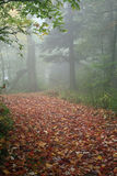 misty μονοπάτι Στοκ φωτογραφία με δικαίωμα ελεύθερης χρήσης