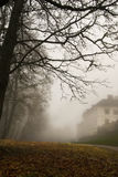 misty πρωί Στοκ Εικόνα