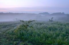 Misty τοπίο άνοιξη στην επαρχία Στοκ Φωτογραφίες