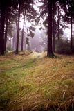 Misty δάσος Στοκ Εικόνα