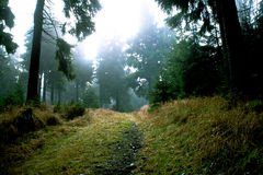 Misty δάσος Στοκ Φωτογραφία