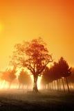 misty ανατολή Στοκ εικόνες με δικαίωμα ελεύθερης χρήσης