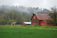 αγρόκτημα misty Στοκ Φωτογραφίες