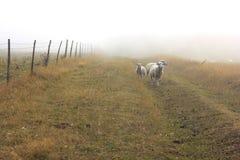 Misty Αγγλία Στοκ Φωτογραφία