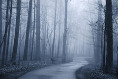 Misty alley Royalty Free Stock Images
