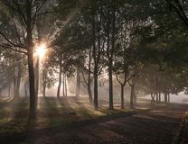 Misty alley in the park Stock Photography