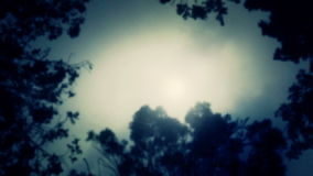 Misty atmosphere. Forest Trees through a fog. Looking at the sky through a forest trees in a heavy fog stock video footage