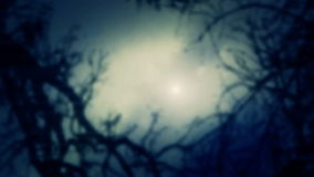 Misty atmosphere. Forest Trees through a fog. Looking at the sky through a forest trees in a heavy fog stock video
