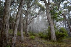 Misty Aussie-bushland Lizenzfreies Stockbild