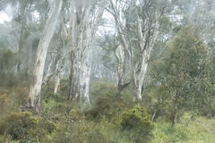 Misty Australian Bush Fotografia Stock Libera da Diritti