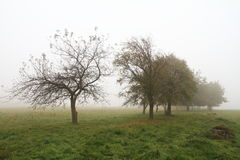 Misty autumn Royalty Free Stock Photos
