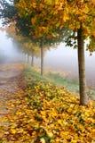 Misty autumn alley Stock Image