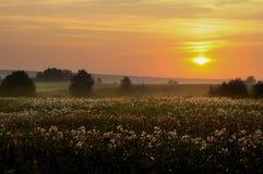 Misty autumn dawn Stock Photography