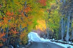 Misty autumn drive Stock Photography