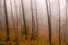 Misty Autumn Forest Stock Photography