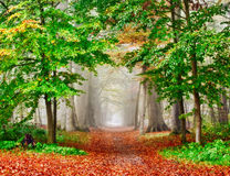 Misty Autumn Forest Stock Images