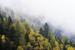 Misty autumn forest on hillside Royalty Free Stock Photo