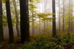 Misty autumn forest, the mountains. Royalty Free Stock Photography