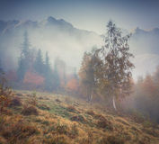 Misty autumn forest in the mountains Stock Image