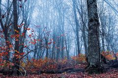 Misty autumn forest. Nature backdrop Royalty Free Stock Image