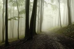 Misty autumn forest path Royalty Free Stock Photo