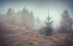 Misty autumn forest Stock Image