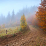 Misty autumn forest Stock Photo