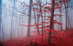 The misty autumn forest. Shallow depth of field Royalty Free Stock Images