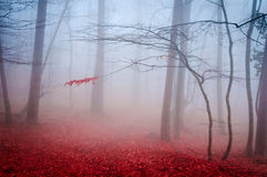 The misty autumn forest. Shallow depth of field.  royalty free stock photography