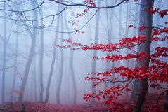 The misty autumn forest. Shallow depth of field Royalty Free Stock Image