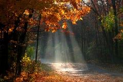 Misty Autumn Landscape Stock Photography