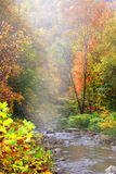 Misty autumn landscape Royalty Free Stock Images