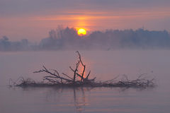 Misty Autumn Landscape. At sunrise on lake with dry branches royalty free stock image