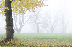 Misty autumn lanscape with trees Royalty Free Stock Photos