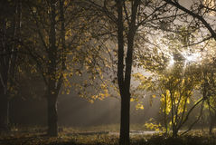 Misty autumn light Royalty Free Stock Photos