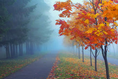 Misty Autumn Morning Royalty Free Stock Images