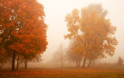 Misty autumn morning. With cool fog Royalty Free Stock Photography