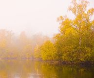 Misty autumn morning. Misty morning around this Norfolk lake with autumn colour in the tree's Royalty Free Stock Photo