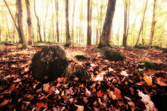 Misty Autumn Morning dans les bois Photos libres de droits