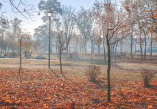 Fog in the morning in the park in Autumn in Kiev. Misty autumn morning in the park in Kiev Royalty Free Stock Photo